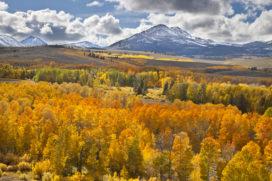 Best Buy - fall colors